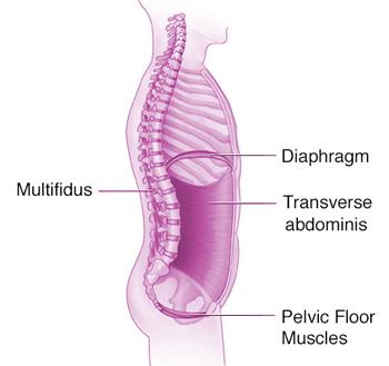 Anatomy of core and pelvic floor